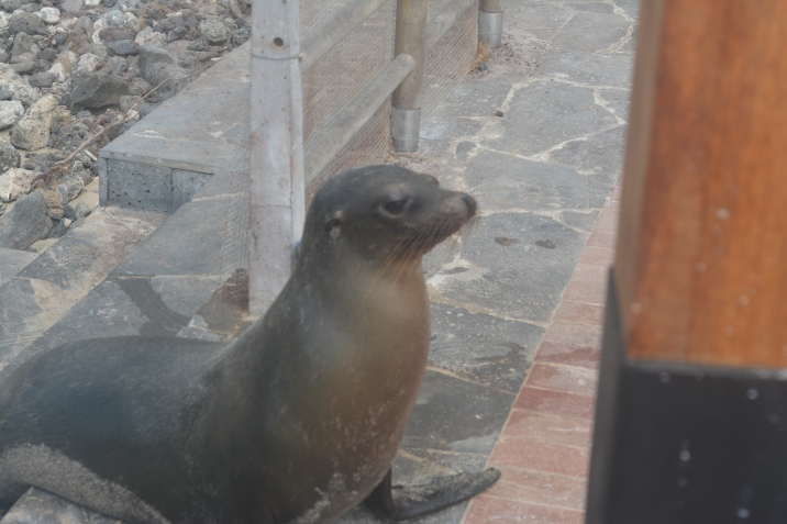 Sea lion resident