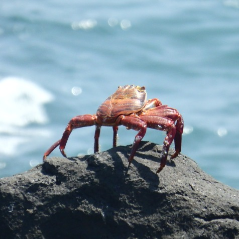 one of many crabs