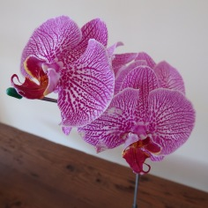 Orchids in the hotel