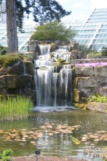The water garden at Kew