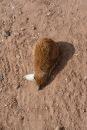 mongoose sleeping