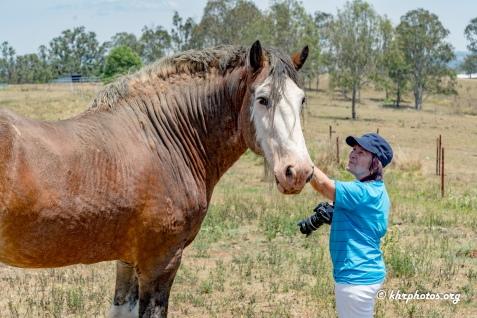The stallion with Monika