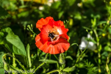 1st Bumble bee