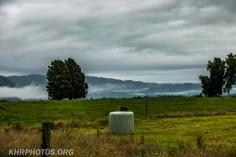 Marshmallow Field