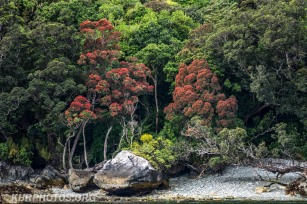 Doubtful Sound (28 of 68)