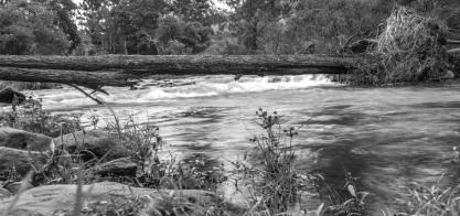 Cedar Creek (20 of 21)