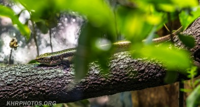 Auckland Zoo (8 of 15)